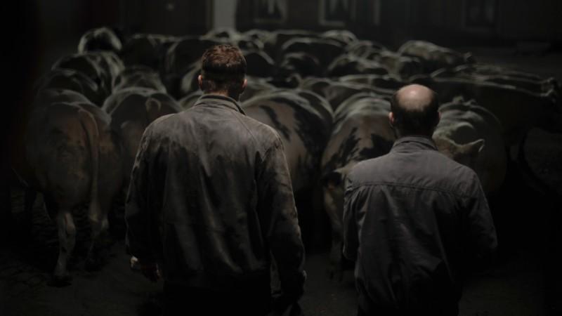 Una cupa sequenza di Rundskop del regista Michaël R. Roskam