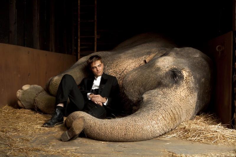 Robert Pattinson in una bella immagine del film Come l'acqua per gli elefanti