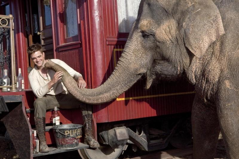 Robert Pattinson in una immagine del film Come l'acqua per gli elefanti