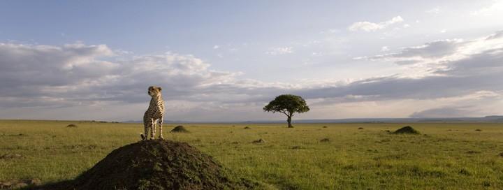 Una suggestiva immagine del documentario  African Cats - Il regno del coraggio