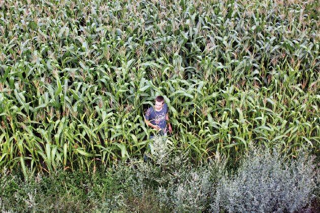 Lukas Steltner in una suggestiva scena del film Harvest