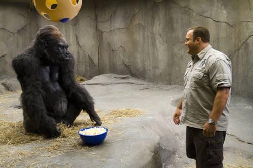 Kevin James alle prese con un gorilla in The Zookeeper (Il signore dello zoo)