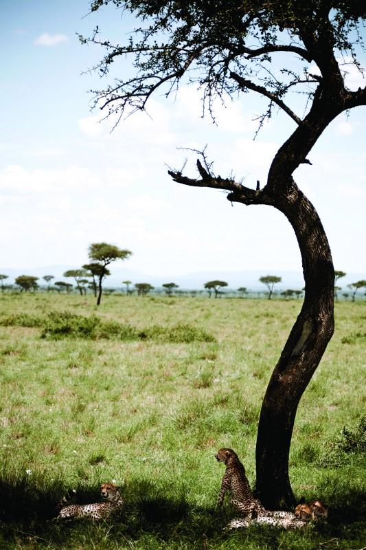 Una immagine del film  African Cats - Il regno del coraggio
