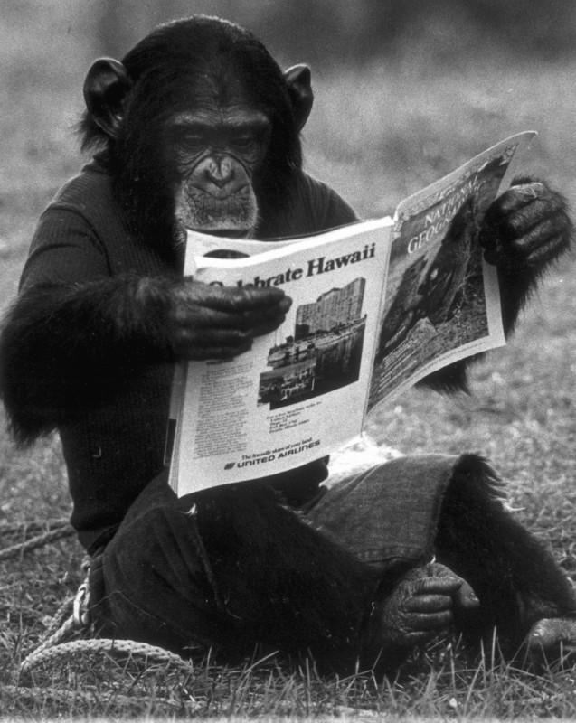 Project Nim: Nim legge il giornale in una scena tratta dal documentario di James Marsh