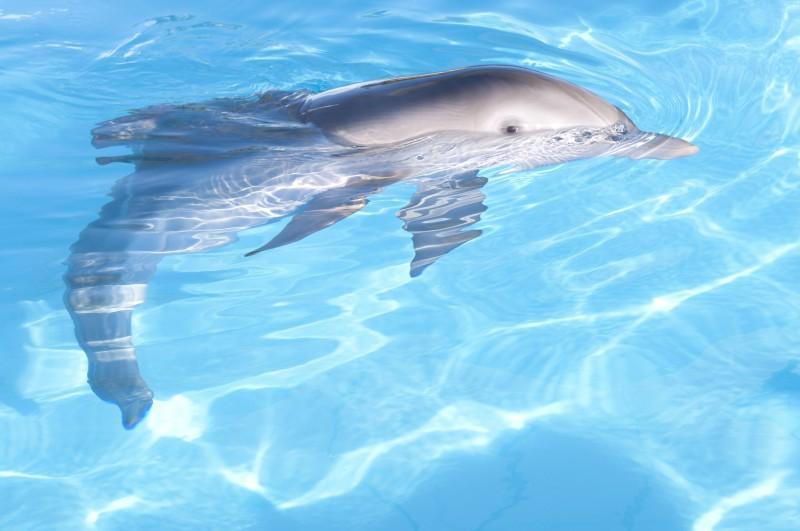 Il bellissimo delfino protagonista de L'incredibile storia di Winter il delfino