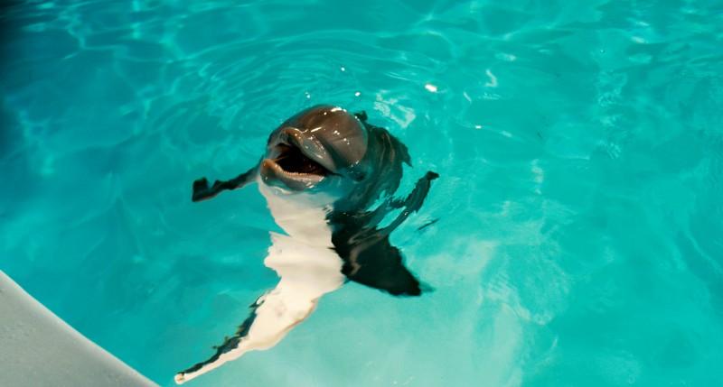 Il brillante delfino Winter, protagonista del film per ragazzi L'incredibile storia di Winter il delfino