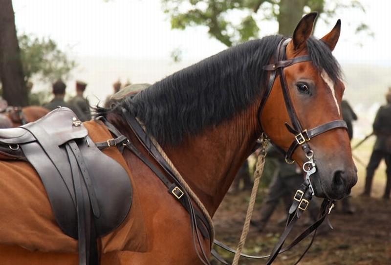 Lo splendido cavallo Joey sul set di War Horse