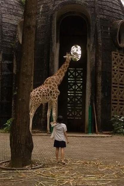 Postcards From The Zoo: una scena del film