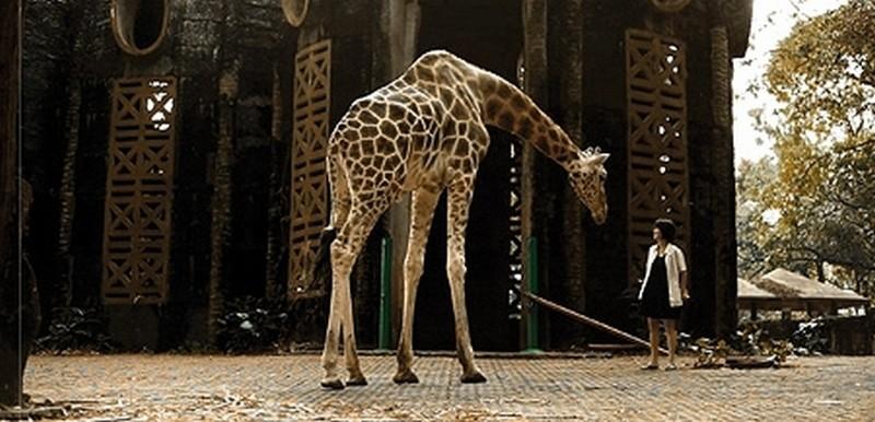 Postcards From The Zoo: una scena tratta dal film