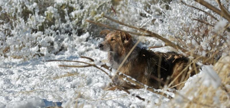 Il protagonista canino di Darling Companion sperduto nel bosco