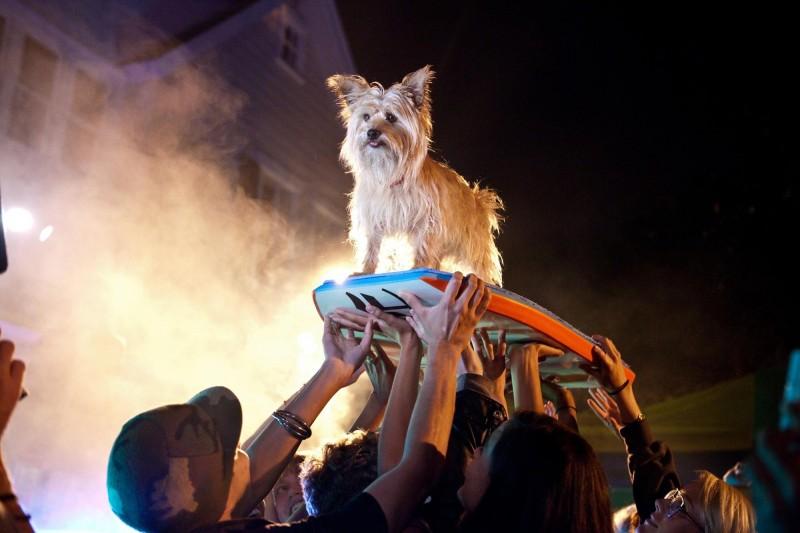 Project X - una festa che spacca: un cagnolino festeggiato dai presenti