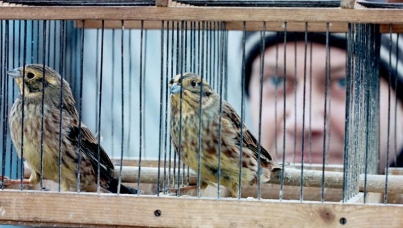 Silent Souls: Igor Sergeyev con i suoi uccellini in una scena del film