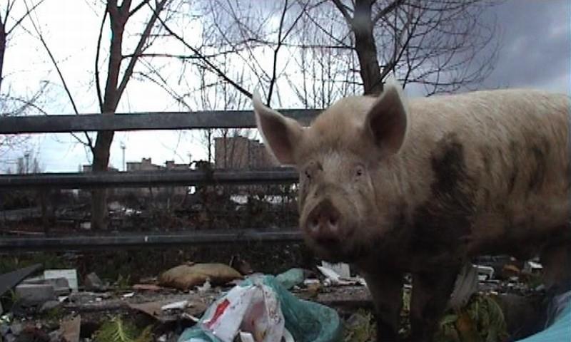 Napoli 24: uno squarcio della città partenopea in una scena del documentario diretto da 24 autori durante l'emergenza rifiuti