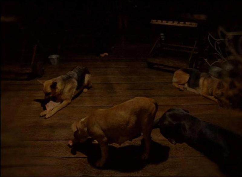 Post Tenebras Lux: alcuni cani immortalati in una scena del film