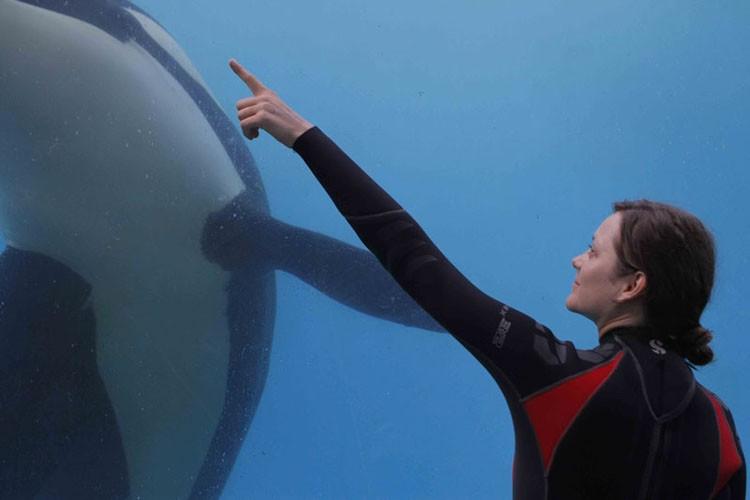 Rust and Bone: Marion Cotillard in visita all'acquario in una scena del film