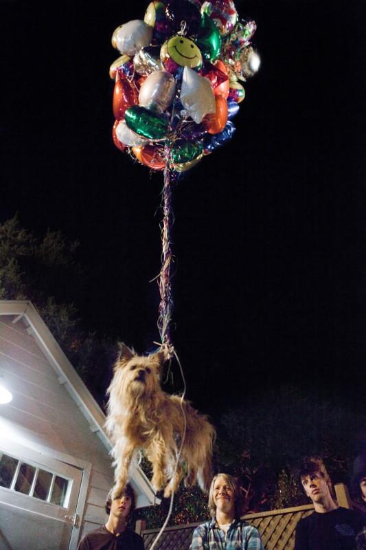 Project X - una festa che spacca: un cagnolino aereo per i festeggiamenti in una scena