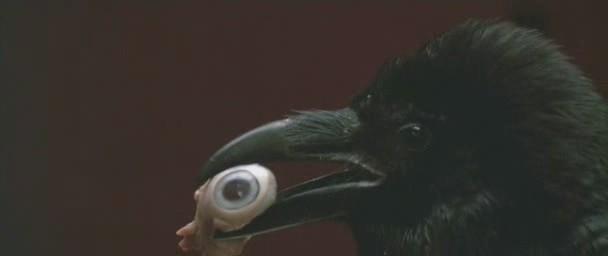 Uno dei corvi del film Opera (1987)