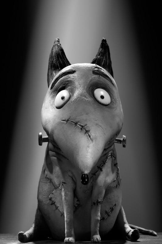 Frankenweenie: il character portrait di Sparky, il bull terrier devoto e giocherellone di Victor