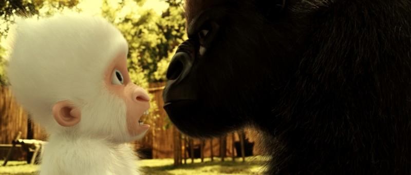 Le avventure di Fiocco di Neve: il piccolo gorilla albino a confronto con un grande gorilla nero