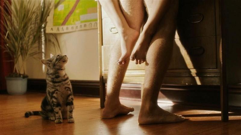 Save the Date: un gatto voyeur in una sequenza