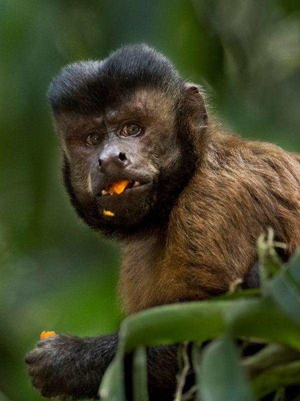 Amazonia: un'immagine tratta dal documentario di Thierry Ragobert
