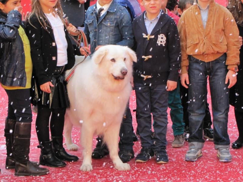 Belle & Sebastien: la star del tappeto rosso al Festival di Roma 2013 è un bellissimo cane bianco