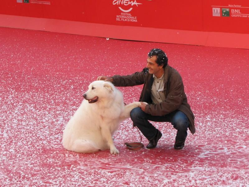 Belle & Sebastien: Nicolas Vanier al Festival di Roma 2013, sul red carpet accanto a un bellissimo pastore dei Pirenei