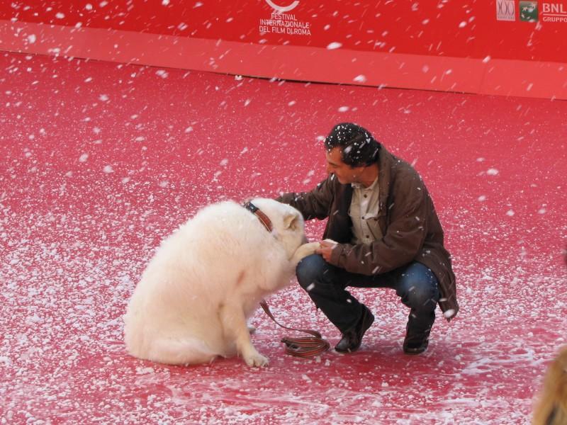 Belle & Sebastien: Nicolas Vanier al Festival di Roma 2013, sul tappeto rosso accanto a un bellissimo pastore dei Pirenei