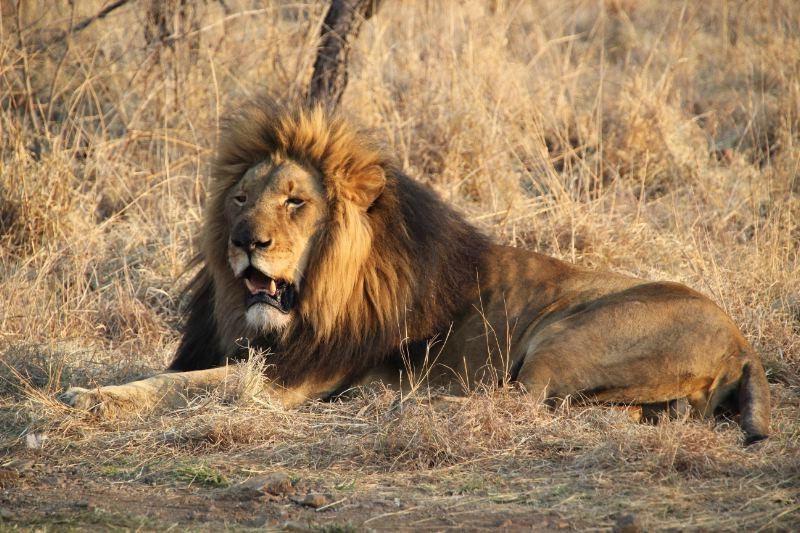 African Safari 3D: il re della foresta in una scena del film in 3D