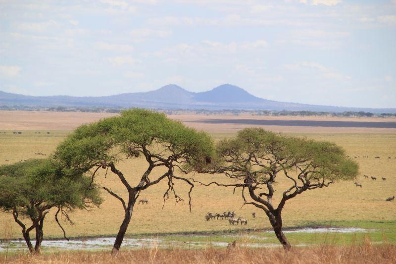 African Safari 3D: l'Africa in tutta la sua bellezza in una delle spettacolari immagini del film