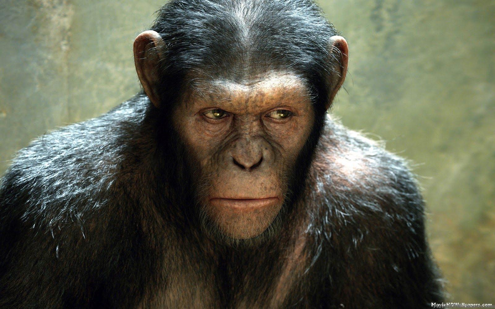 Andy Serkis nei 'panni' di Cesare in Apes Revolution - Il pianeta delle scimmie