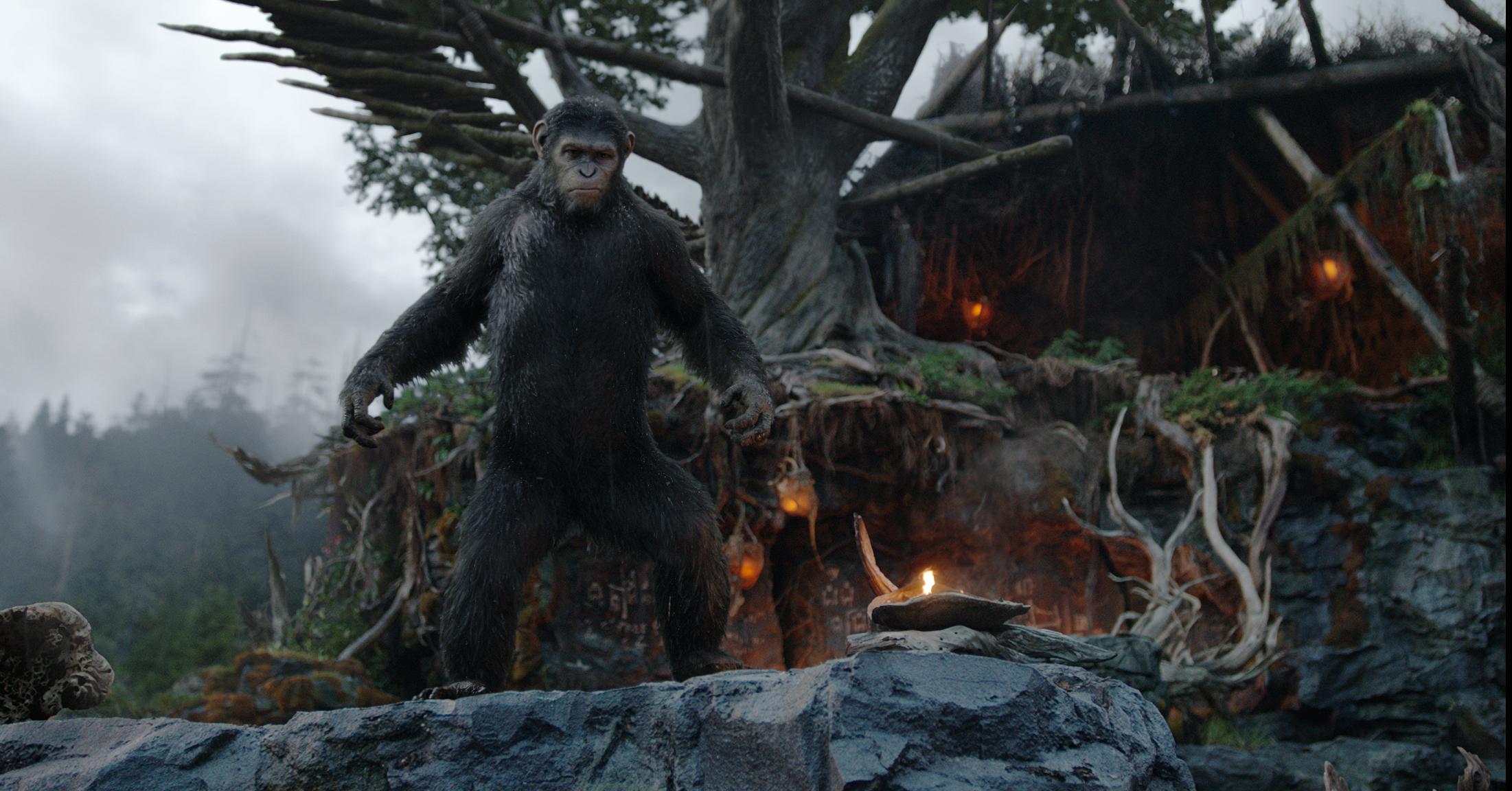 Apes Revolution - Il pianeta delle scimmie: il leader Cesare in una scena