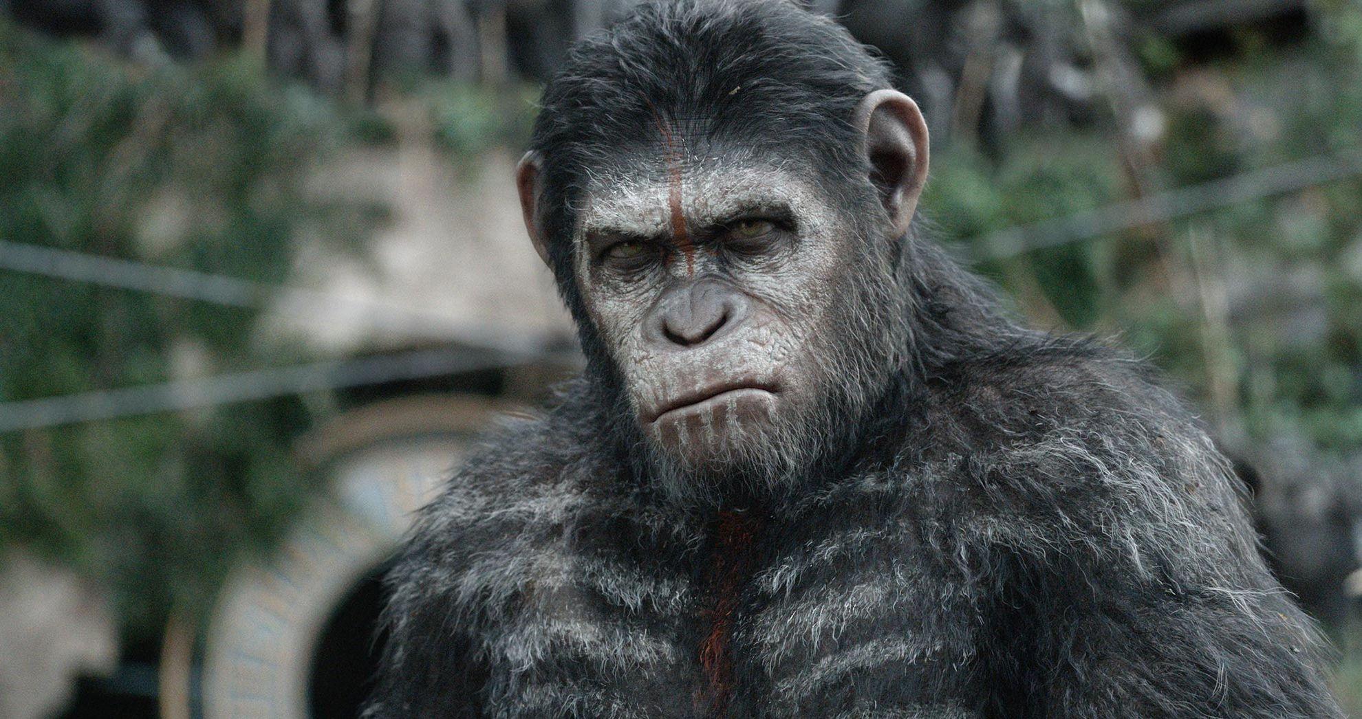 Apes Revolution - Il Pianeta delle Scimmie: una scena del film