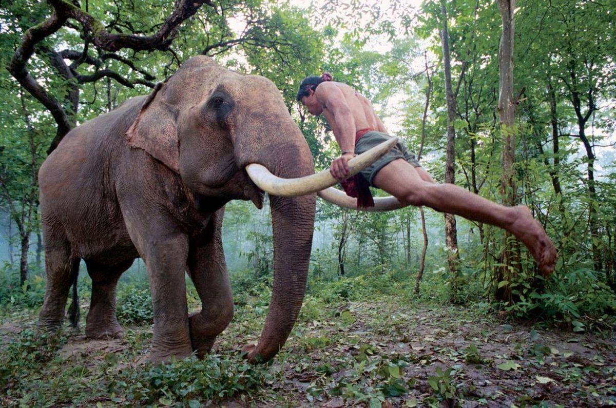 The Protector 2: Tony Jaa si allena sulle zanne di un elefante in una scena del film