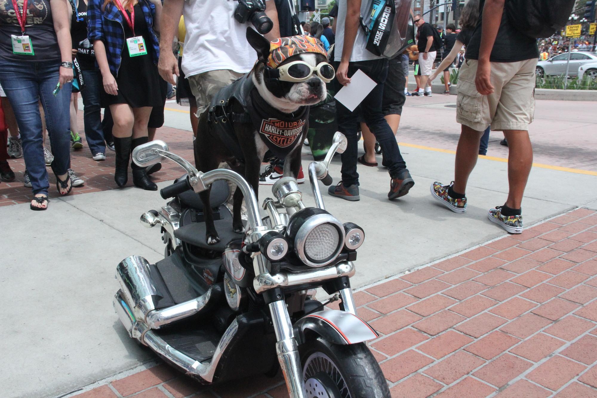 Comic-Con 2014: Cosplay - una versione canina di Ghostrider... forse