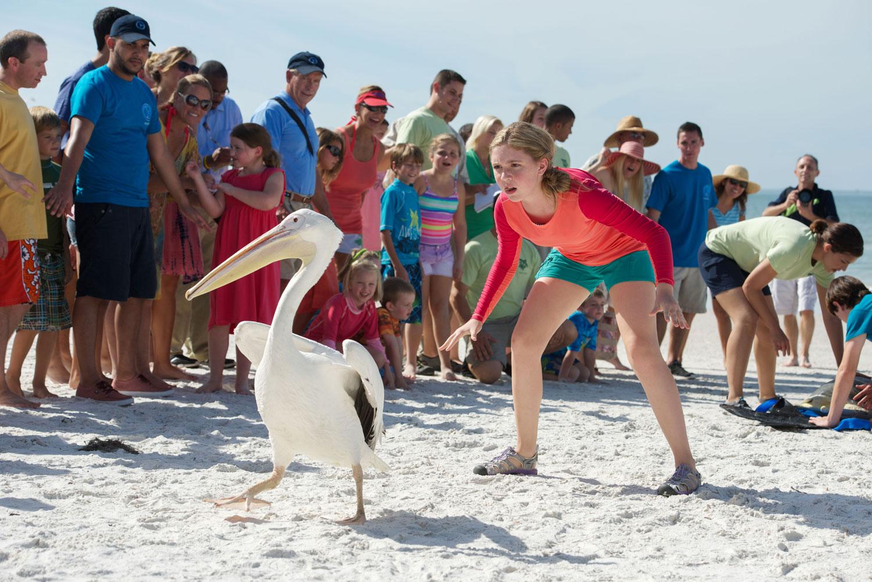 L'incredibile storia di Winter il delfino 2: Cozi Zuehlsdorff con un pellicano in una scena