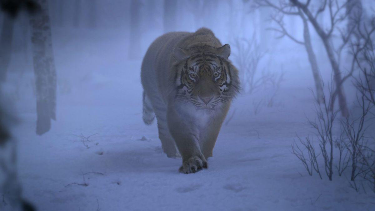The Taking of Tiger Mountain: una scena del film