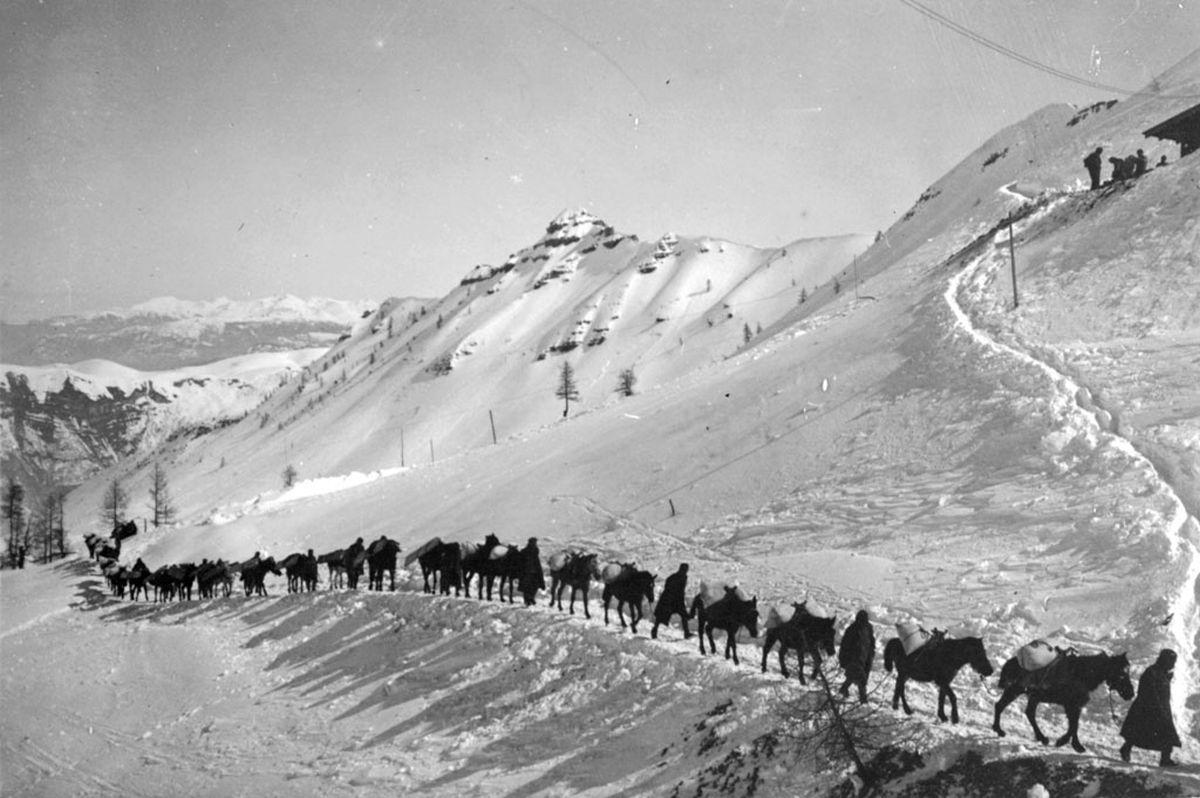 Animali nella Grande Guerra: una scena del documentario di Folco Quilici
