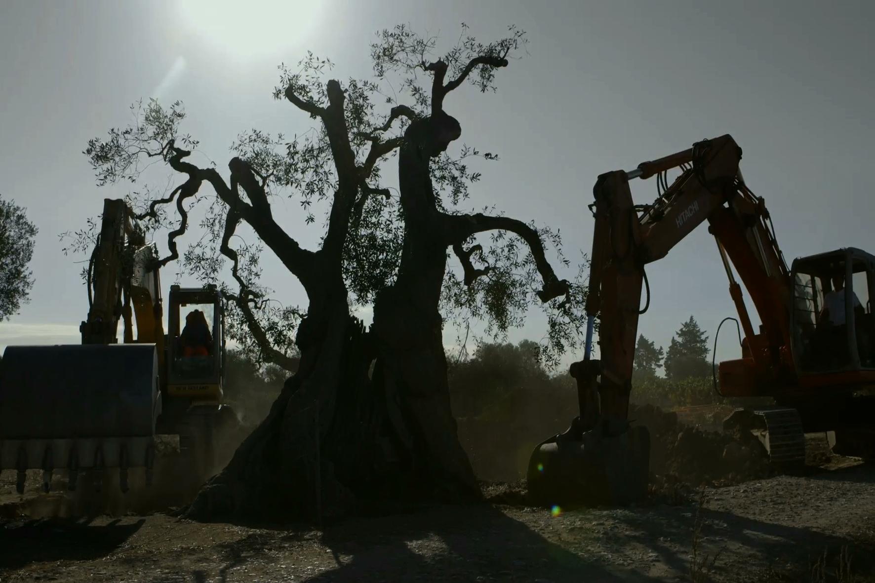 Alberi che camminano: un'immagine del documentario di Mattia Colombo