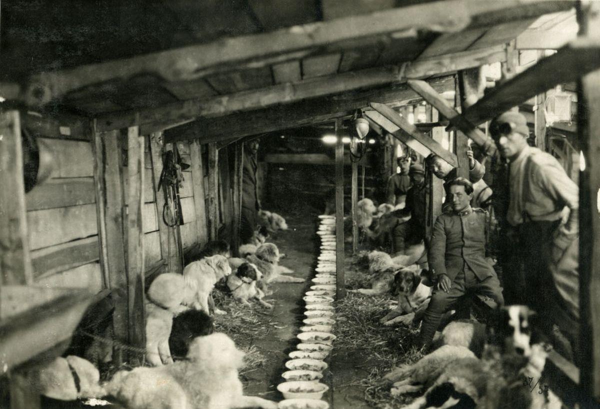Animali nella Grande Guerra: cani e soldati in un'immagine del documentario