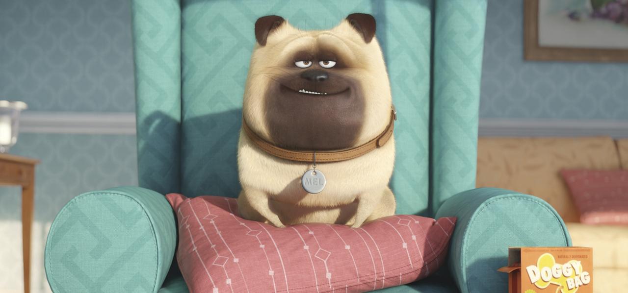 Pets - Vita da animali: uno dei simpatici cagnolini protagonisti