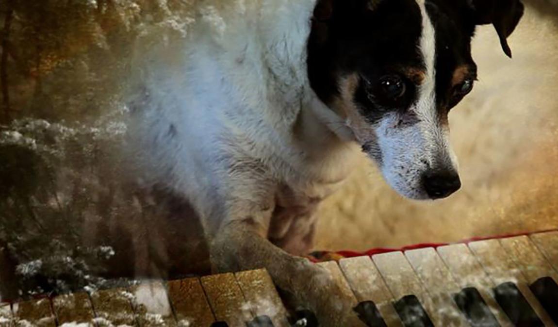 Heart of a Dog: la prima immagine del film di Laurie Anderson