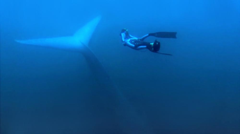 Racing Extinction: una bella immagine subacquea del documentario