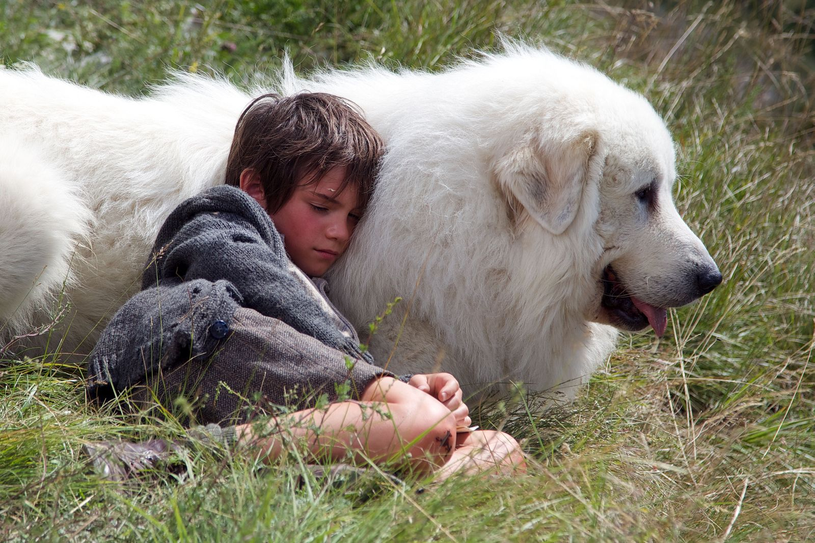 Belle & Sebastien - L'avventura continua: Félix Bossuet addormentato sul fianco del suo amato e vigile cane