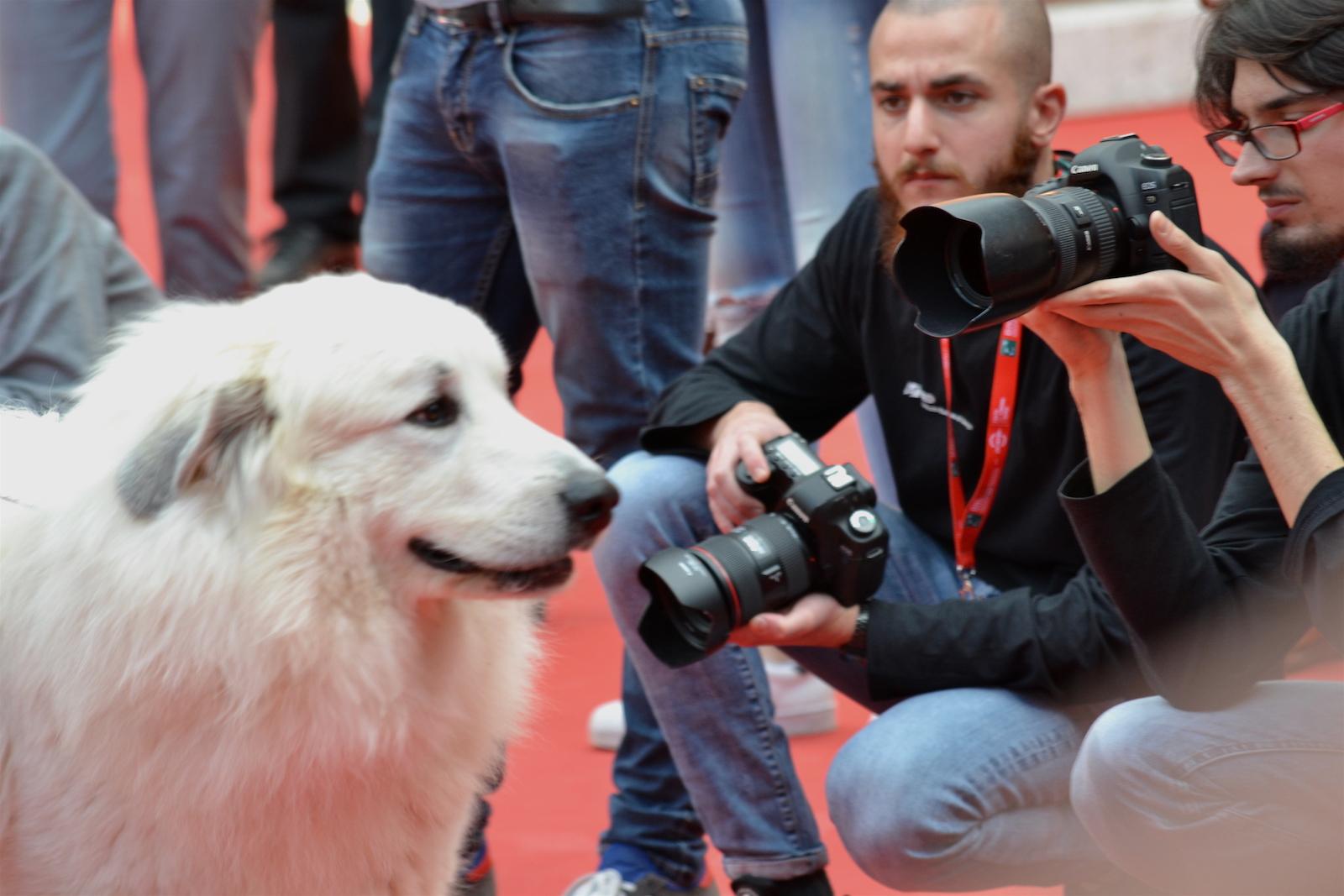 Roma 2015: Il cane bel con i fotografi sul red carpet di Belle & Sèbastien, l'avventura continua