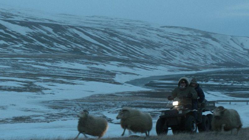 Rams - Storia di due fratelli e otto pecore: un'immagine tratta dal bel film islandese
