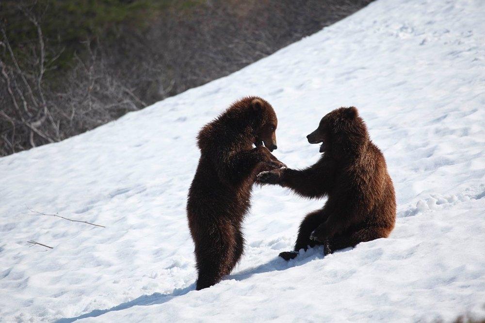 La terra degli orsi: un'immagine del documentario