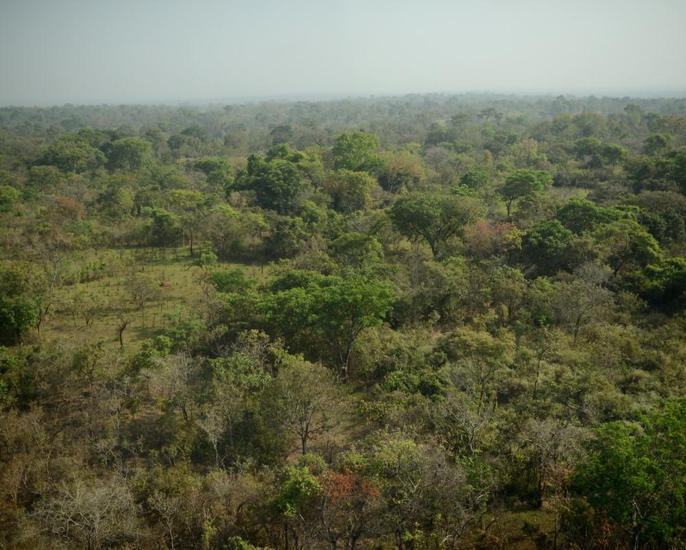 Wrong Elements: un'immagine di una foresta tratta dal documentario