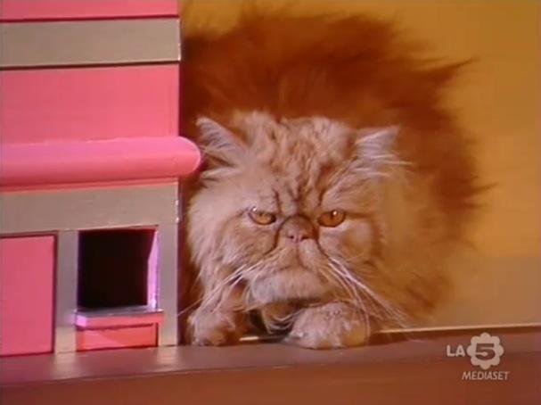 Love Me Licia: il gatto Giuliano