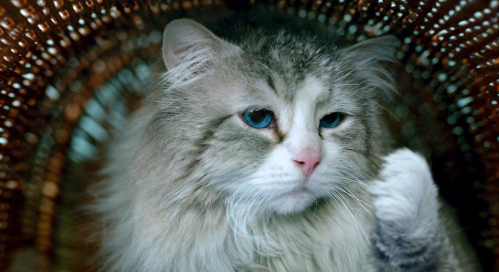 Una vita da gatto: un momento del film